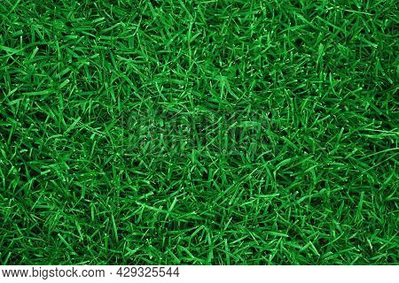 Green Grass Texture For Background. Green Lawn Pattern And Texture Background. Top View Of Grass Gar
