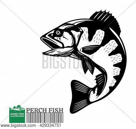 Vector Jumping Perch Fish Illustration