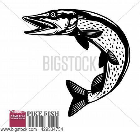 Vector mackerel fish illustration isolated on a white background