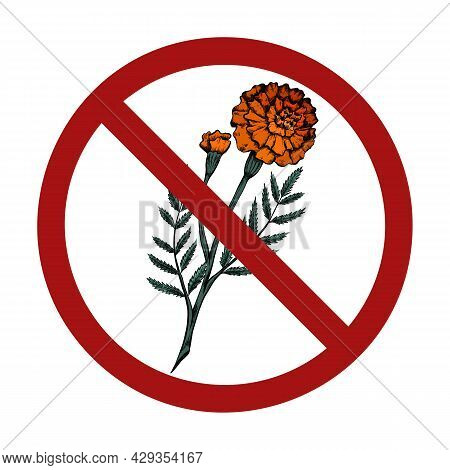 Hand Drawn Sketch Of Marigolds In A Prohibition Sign. Danger Of Allergies. It Is Forbidden To Pick F