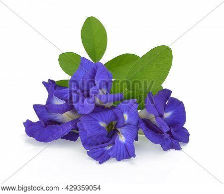 Clitoria Ternatea Or Aparajita Flower Isolated On White Background