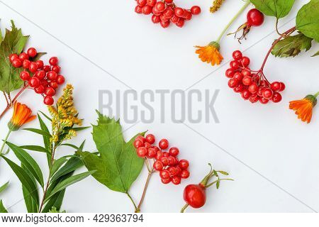 Autumn Floral Composition. Frame Made Of Autumn Plants Viburnum Berries Orange Flowers Isolated On W