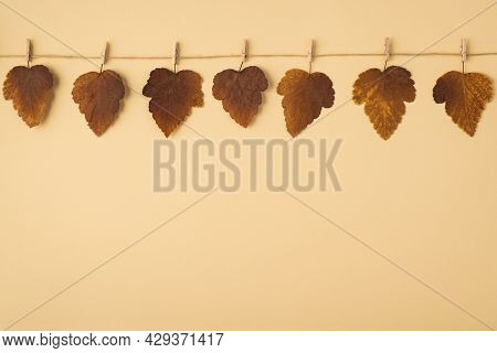 Top View Photo Of Brown Autumn Mulberry Leaves Holding On Twine Attached With Wooden Clothespins On