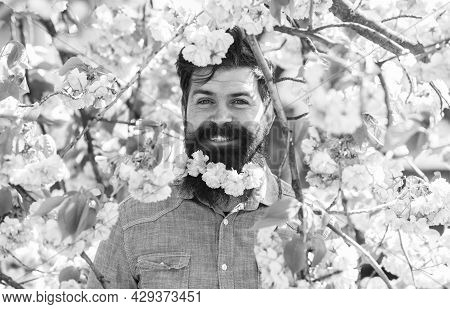 Hiding In Bloom. Handsome Bearded Man Outdoors. Happy Easter. Weekend In Garden Concept. Lot Of Flow