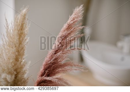Pampas Grass In Interior Og Bathroom. Boho Style In Natural Tones And Neutral Colors.