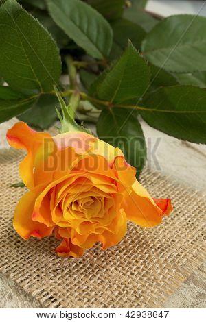 Pretty Rose...