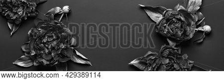 Surreal Black And White Peonies Frame On Black Banner. Dark Floral Background