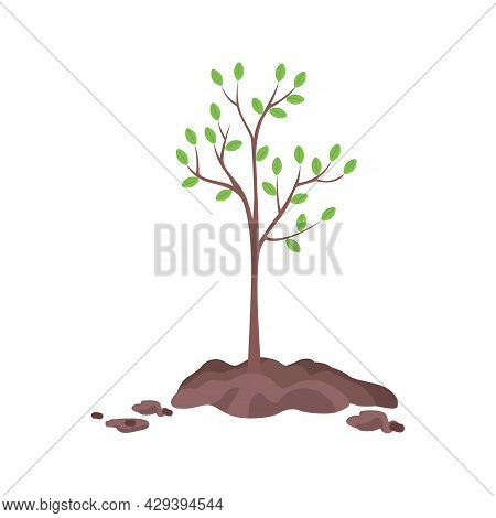 Planting Tree In Spring Semi Flat Color Vector Object. Full Sized Item On White. Tree Seedling. Conc