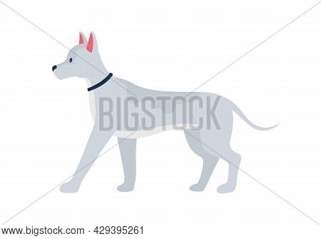 Grey Dog With Prick Ears Semi Flat Color Vector Character. Full Body Animal On White. Adopting Pet F