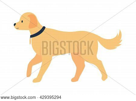 Golden Retriever Adoption Semi Flat Color Vector Character. Full Body Animal On White. Choosing Fami