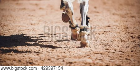 The Legs Of A Gray Fast Racehorse, Running At A Gallop, Which Steps With Its Hooves On The Sand In T