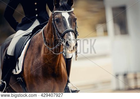 Portrait Sports Stallion In The Double Bridle With A White Groove On The Muzzle. Dressage Of Horses.