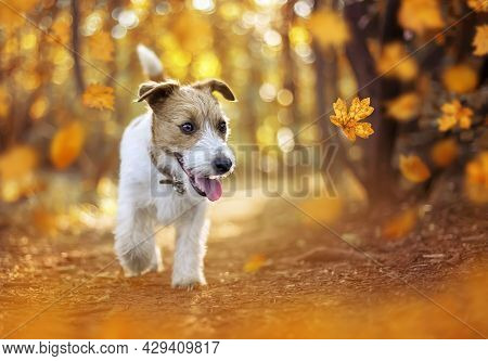 Happy Pet Dog Puppy Walking In The Forest. Orange Golden Autumn Fall Concept.