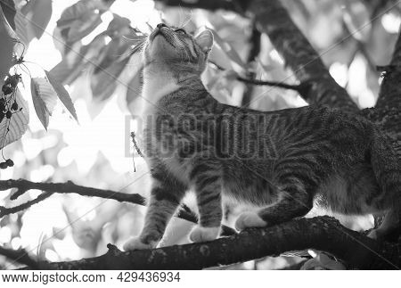Cute Kitty. Outbred Cat On Branches. Domestic Animal And Pet. Concept Of Vet And Veterinarian. Pureb