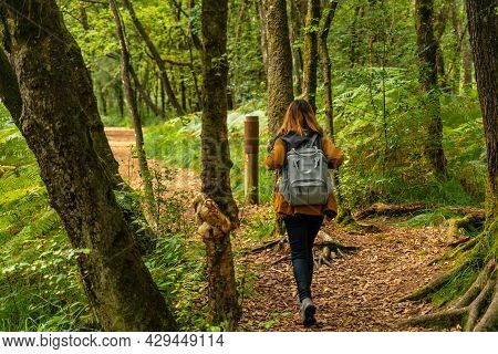 A Young Woman Trekking On Lake Paimpont In The Broceliande Forest, Ille-et-vilaine Department, Britt