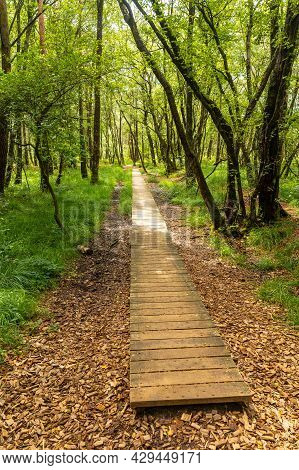 Wooden Footpath At Lake Paimpont In The Broceliande Forest, Ille-et-vilaine Department, Brittany, Ne