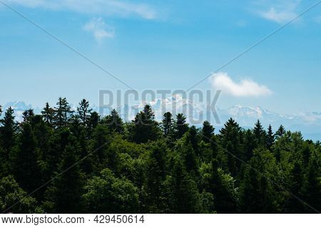 View Over A Forest From The Swiss Jura Mountains Towards The Mont-blanc Ridge.