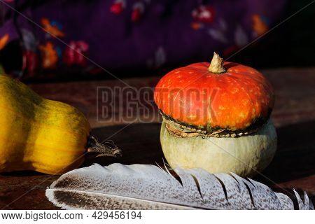 Close-up Turban Squash, Cucurbit, Yellow Squash, Quill Pen. Still-life. Turkish Pumpkin With A Turba