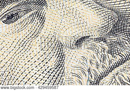 Macro Close Up Of 50 Us Dollar Banknote. Close Up Of Fifty American Dollar Note. Us Dollar Is The Wo