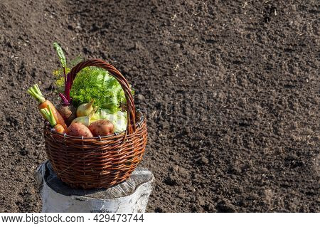 Basket Of Vegetables Against The Background Of Their Own Garden.