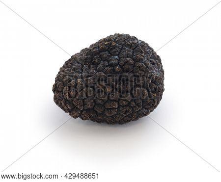 fresh black truffle isolated on white background