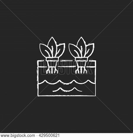 Hydroponics Chalk White Icon On Dark Background. Grow Plants Without Soil. Farming Herbs And Vegetab
