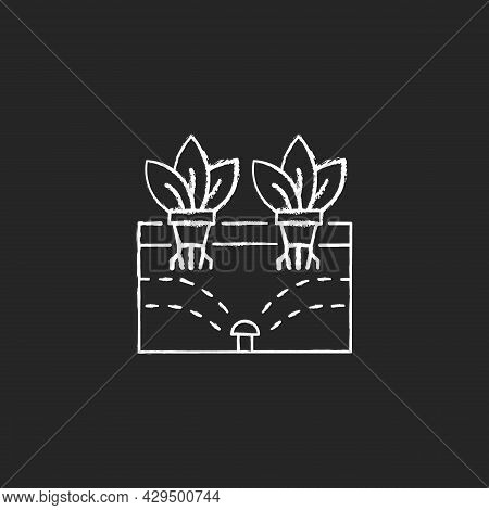 Aeroponics Chalk White Icon On Dark Background. Grow Plants With Air, Water And Nutrients. Soilless
