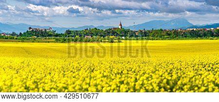 Feldioara, Romania. Spring Yellow Rape Field Landscape In Brasov, Transylvania And The Medieval Fort