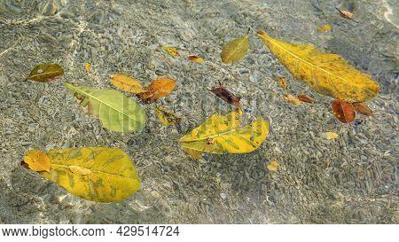 Leaves And Water On Santo Island In Vanuatu