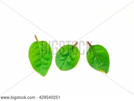 Three Red Malabar Spinach Basella Alba Leaves Isolated On White