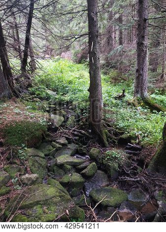 A Mountain Stream Flows Through Pines And Stones. Summer Travel To The Mountains. Vertical Orientati