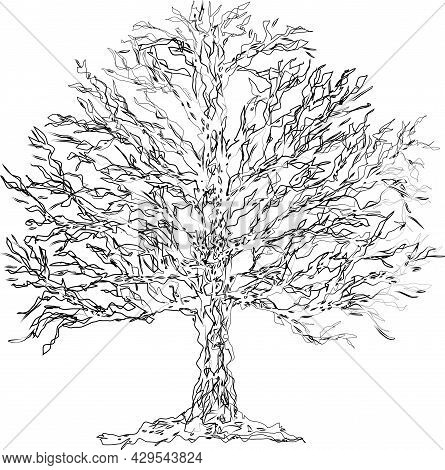 Contour Drawing Of Silhouette Abstract Textured Deciduous Tree
