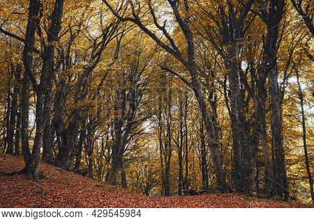 Autumn Forest Nature. Scenery Of Nature In Fall Season. Colorful Landscape With Enchanted Trees With