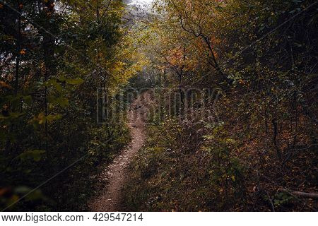 Scenery Of Nature In Fall Season. Colorful Landscape With Enchanted Trees With Orange And Red Leaves