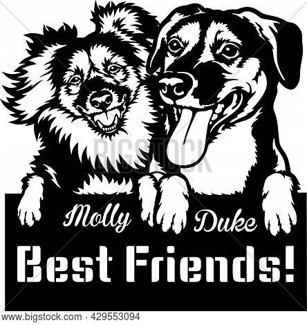 Kromfohrlander, Beagle, Friends - Peeking Dogs - Breed Face Head Isolated On White