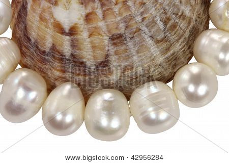 Macro Necklace From Pearls And A Mollusk Shell On A White Background