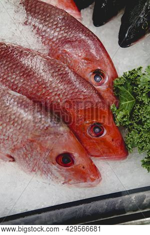 Fresh Whole Head-on Raw Unseasoned Red Snappers For Sale At Local Fish Market