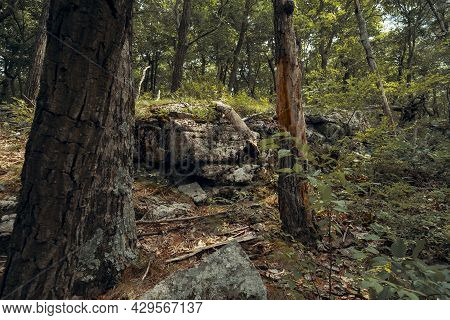 Forest Landscape On Stairway To Heaven Trail In Appalachian Mountains In New Jersey