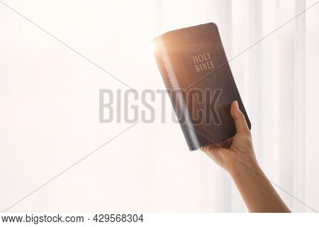 Girl Reading The Holy Bible