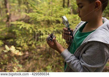 Young Boy Exploring Nature In The Forest With Magnifying Glass. Nature Study For Kids Consept