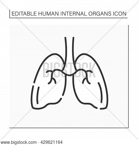 Lungs Line Icon. Medical Treatment. Respiratory Organ. Human Internal Organs Concept.isolated Vector