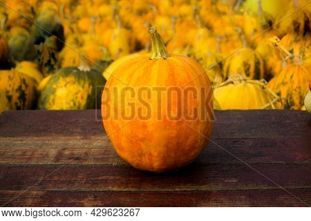 Autumn Frame Composition And Layout Made Of Colorful One Pumpkin Centered, Aged Old Retro Red Backgr