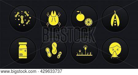 Set Medicine Bottle And Pills, Kidney Beans, Peanut, Mold, Orange Fruit, Parasite Mite, Handkerchief