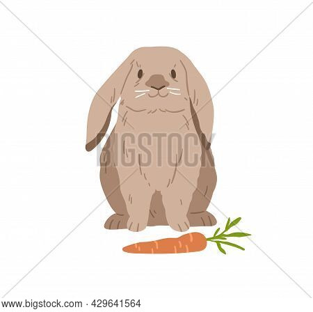 Cute Lop Rabbit. Happy Bunny Sitting Near Carrot. Domestic Animal With Fluffy Fur. Adorable Fuzzy Co