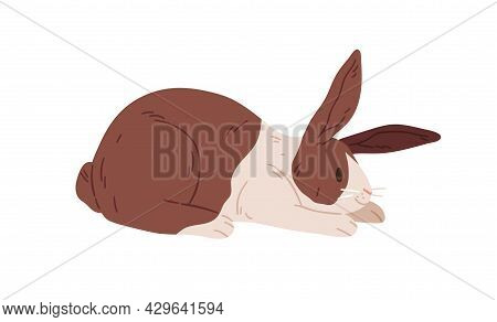 Cute Rabbit Of Dutch Breed. Small Happy Bunny Lying. Domestic Animal With Spots On Fur. Adorable Con