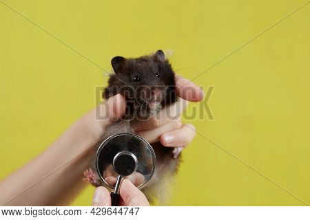 A Small Syrian Hamster Is Listening To A Veterinarian With A Stethoscope Taken On A Yellow Backgroun