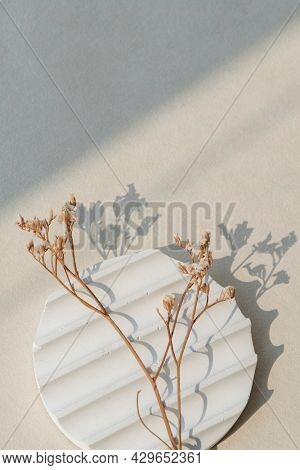 Dried white statice flower with sunlight