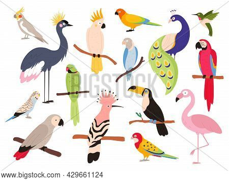 Flat Parrots And Tropical Jungle Birds Flying And Sitting. Macaw, Parakeet, Ara And Colombia Exotic