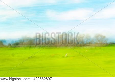 Agricultural Impressionism Sheep Grazing In Field With Trees In Row Taken Using Intentional Camera M