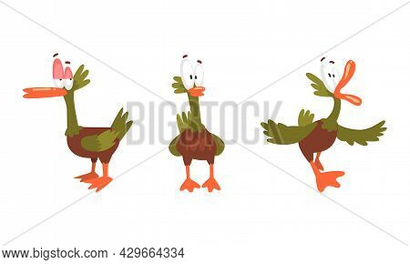 Funny Green Dabbling Duck Character As Feathered Waterfowl Bird Vector Set